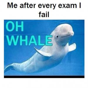 Me after every exam I fail