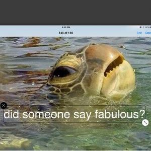 Did somebody say fabulous?
