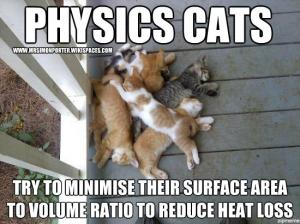 Physics cat  Try to minimise their surface area to volume ration to reduce heat loss