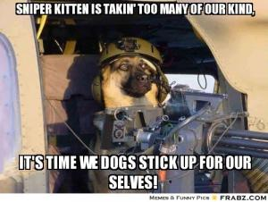 Sniper kitten is takin' too many of our kind,