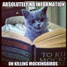 Absolutely no information