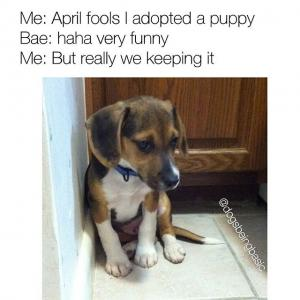 Me: April fools I adopted a puppy