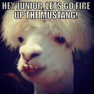 Hey Junior, lets go fire up the Mustang!