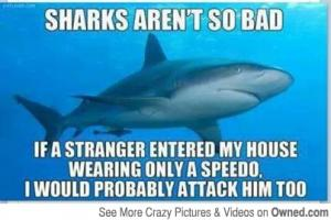 Sharks aren't so bad